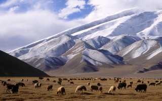 Главные черты визы в Афганистан