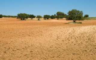 Детали правового регулирования аренды земельных участков