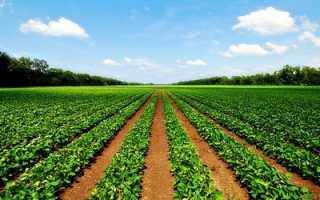 Подготовка договора аренды земельного участка сельскохозяйственного назначения