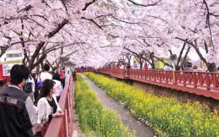 Особенности визы G1 в Южной Корее