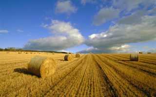 Обзор порядка покупки земельного участка у собственника